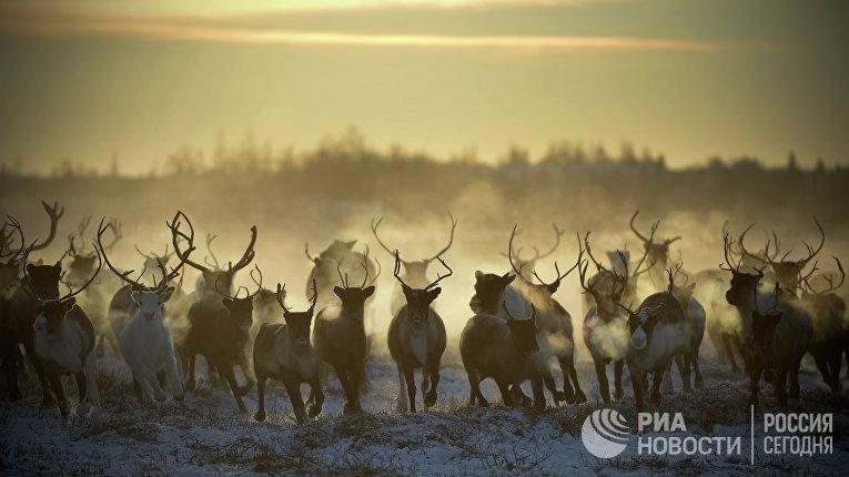 Победитель конкурса Best of Russia Рамиль Ситдиков «Без названия». Номинация «Природа»