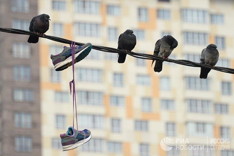 Голуби сидят на проводах в районе Измайлово в Москве