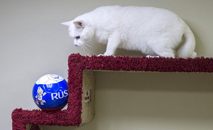 На чемпионате мира россии грозит катастрофа | спорт | иносми все.