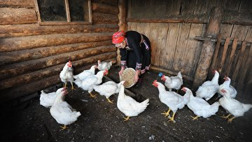 Жизнь марийцев в селе Малая Тавра