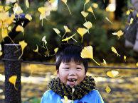 Мальчик играет с осенними листями в Токио