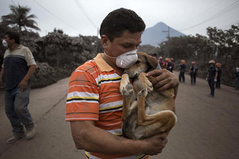 Местный житель и его собака спасаются от извержения вулкана в Гватемале
