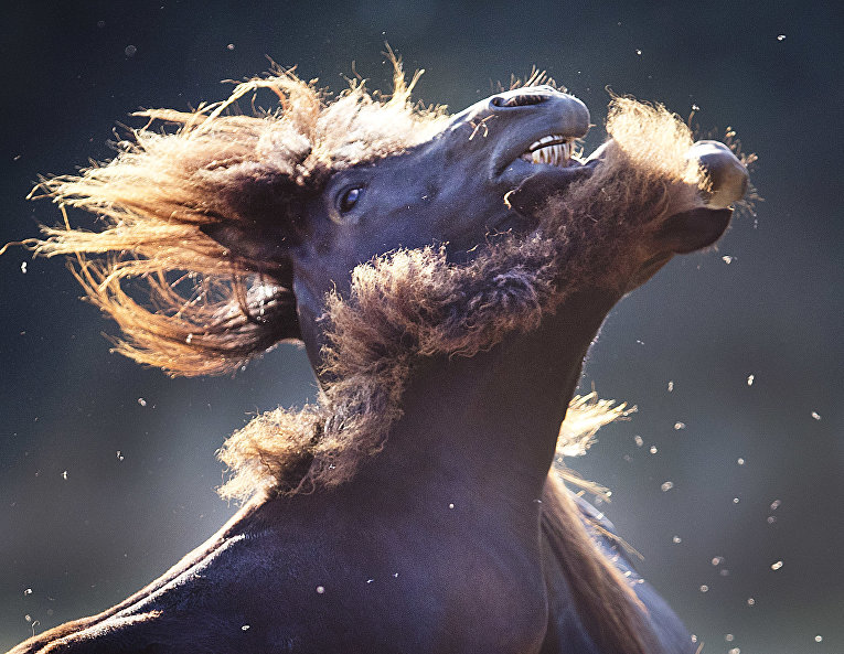 Лошади играют недалеко от Франкфурта, Германия