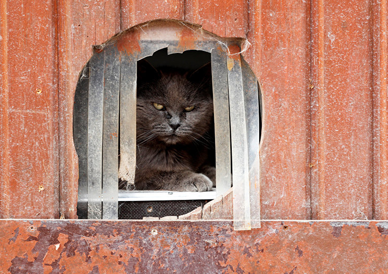 Кошка из приюта для пожилых животных в Чиевресе, Бельгия