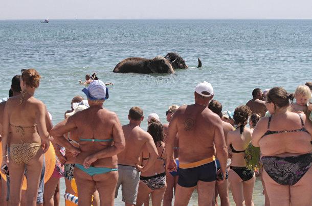 Люди наблюдают за слонами из местного цирка