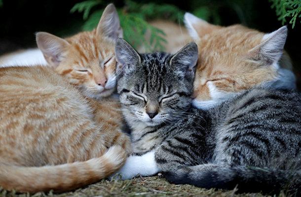 Кошки из деревни Кромпач в Чехии
