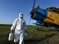 Режим ЧС введен в районе Астраханской области из-за саранчи