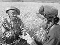 Старейшины колхоза определяют качество зерна