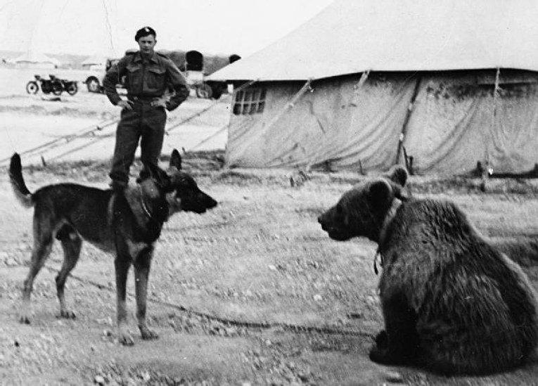 Медведь Войтек знакомится с новым другом
