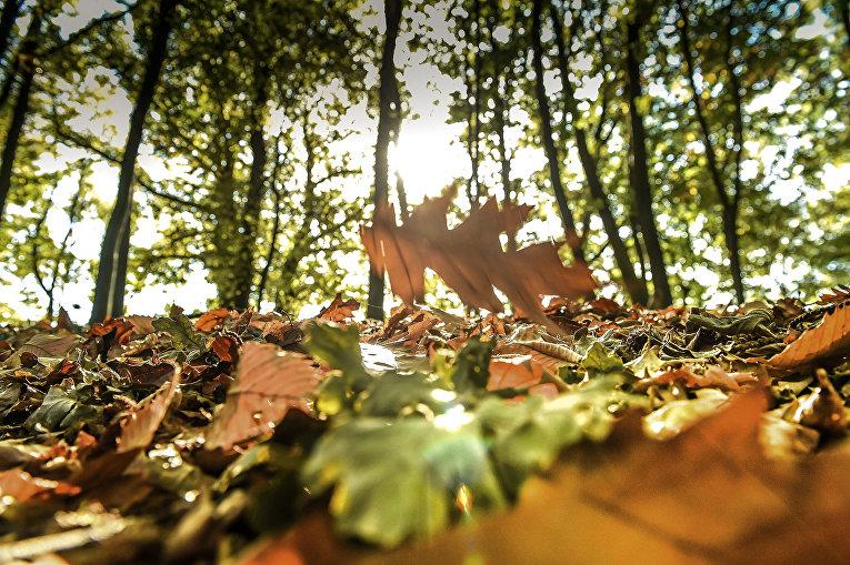 Осенний листопад в лесу на севере Франции