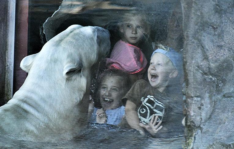 Юные посетители зоопарка наблюдают за белым медведем в Гельзенкирхене, Германия