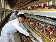 Китай. Сельскохозяйственный кооператив