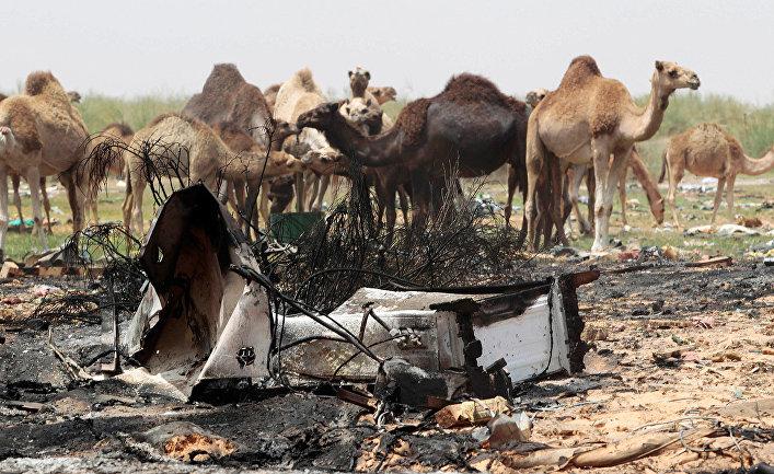 Верблюды на месте военных действий в Триполи