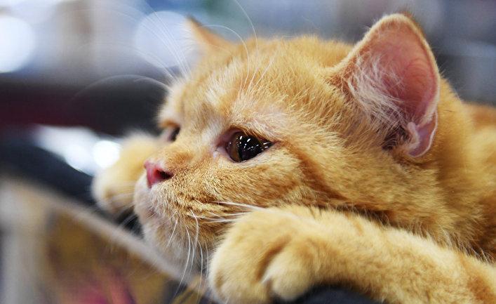 Картинки по запросу кошки