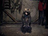 Участник медвежьего танца в Румынии