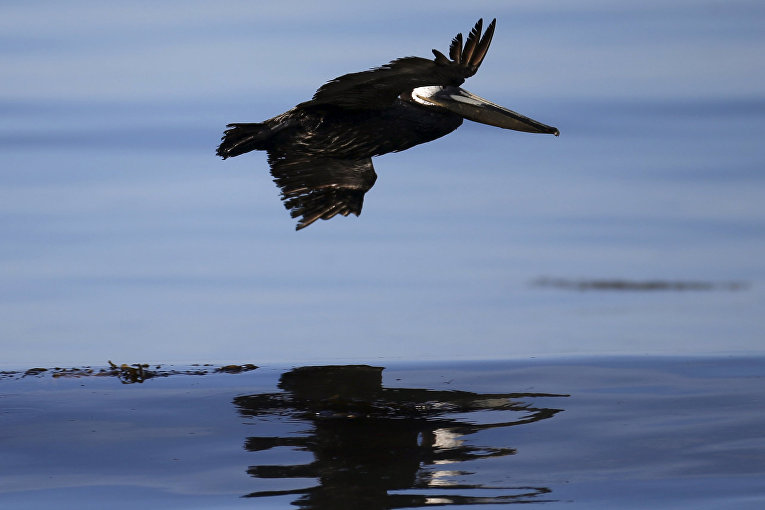 Разлив нефти в Калифорнии