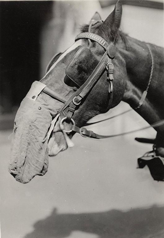 Лошадь в байковом респираторе в Лаборатории химического развития в Филадельфии