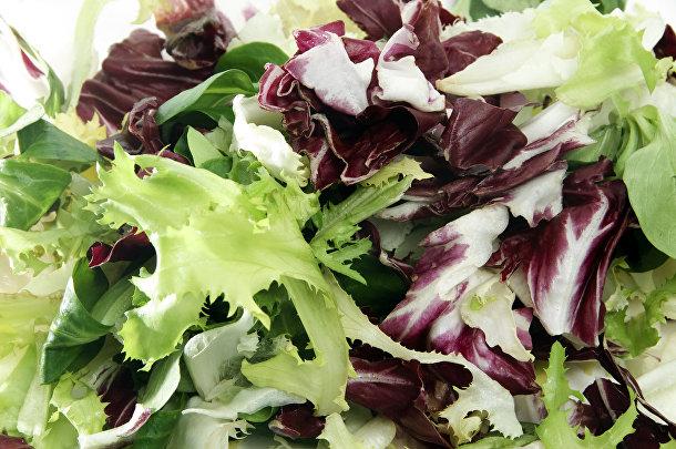 Салат из эндивия и жерухи обыкновенной