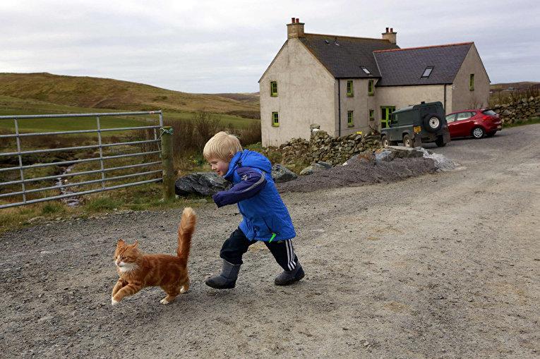 Пятилетний Роан играет с котом, Шетландские острова