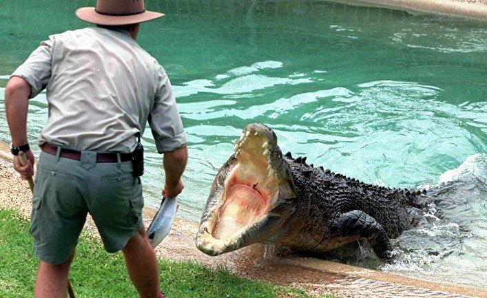 Кормление крокодила в австралийском парке рептилий в Госфорде