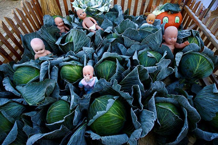 Праздник урожая в белорусском городе Ивье