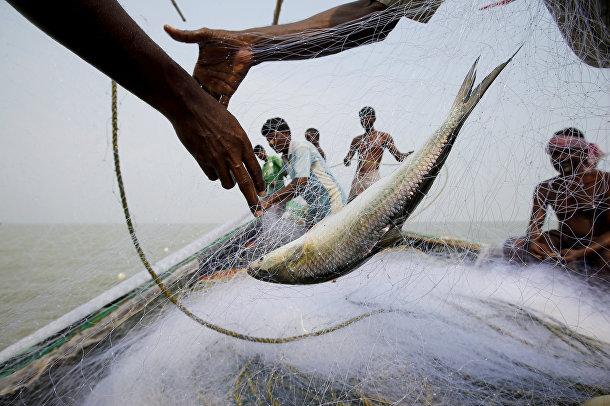 Рыбный промысел у берегов острова Горамара в Индии
