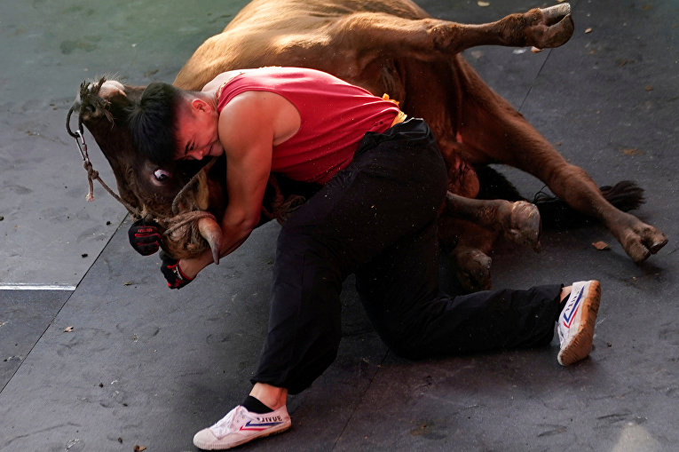 Бои с быками в провинции Чжэцзян, Китай