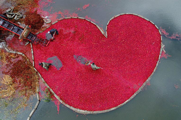 Клюквенное сердце, Сергей Гапон
