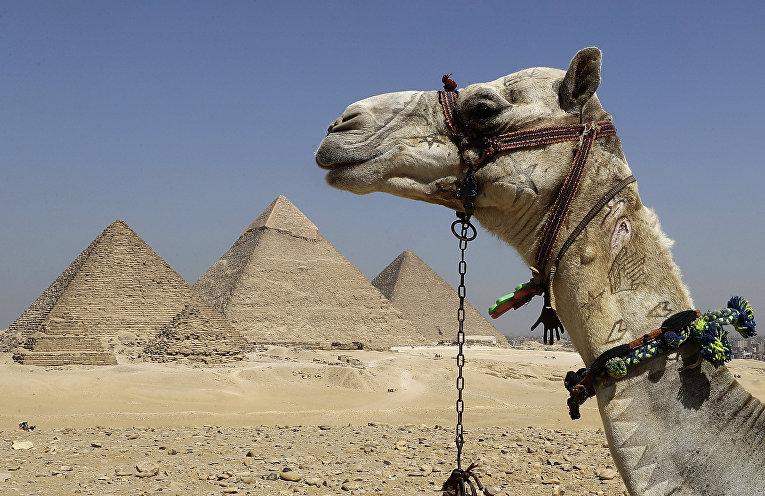 Пирамиды Гизы в Каире