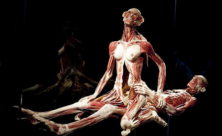 Экспонат выставки немецкого скульптора Гюнтера фон Хагенса в Лондоне