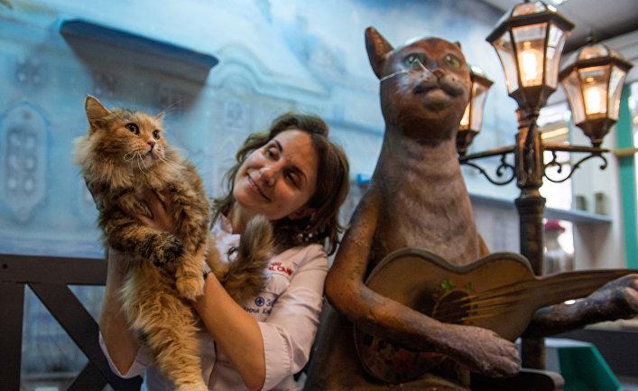 Кошек из Эрмитажа раздали в Санкт-Петербурге