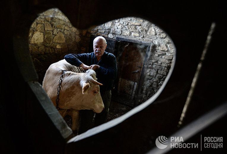 Один из организаторов музея французского сыра фермер Владимир Борев в деревне Масловка Липецкой области