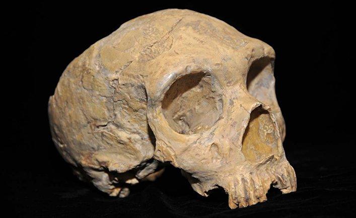 Череп неандертальца из карьера Форбса