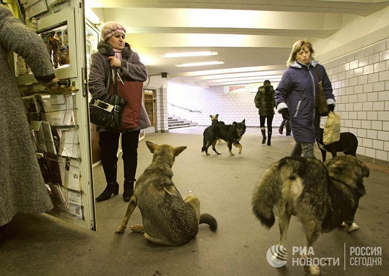 Бродячие собаки в переходе московского метро