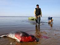 Мужчина-нивх застрелил тюленя, Сахалин