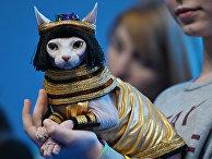 """Конкурс """"Кошка в одежке"""" на выставке """"Кэтсбург"""""""