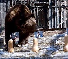 Русские медведи выбрали президента Украины