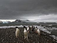 Пингвины на одном из островов архипелага Южные Шетландские острова