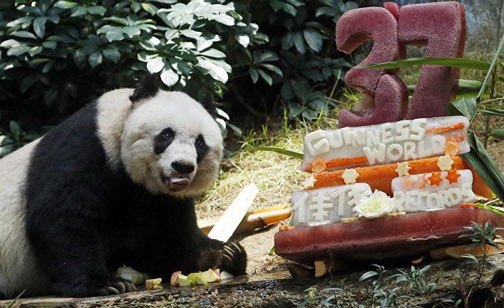 Панду Цзя Цзя Китай подарил Гонконгу в 1999 году в честь двухлетия выхода Гонконга из-под власти Великобритании. Цзя Цзя попала в книгу рекордов Гиннесса как старейшая панда в мире. Она скончалась в возрасте 38 лет