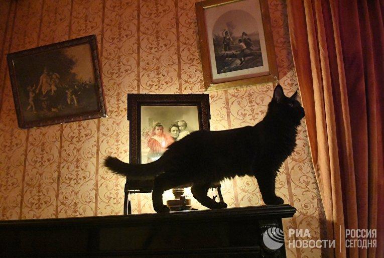 Новый кот Бегемот появился в музее Булгакова