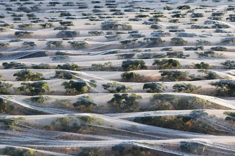 Ухудшение почвы