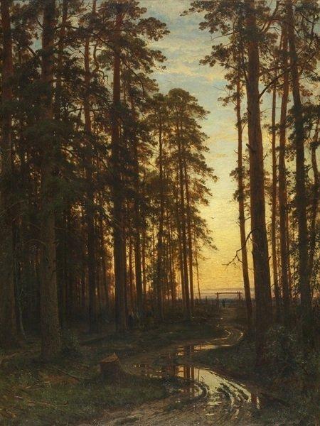 Вечер в сосновом лесу (Сосновый лес)