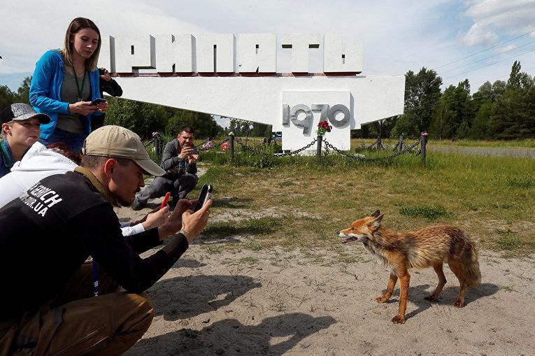 Посетители фотографируют лису в заброшенном городе Припять