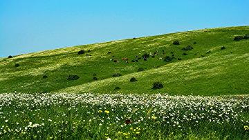 Пейзажи иранской провинции Гилян