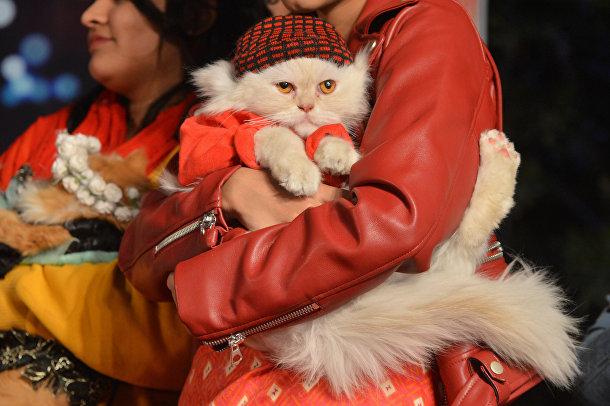 Кошка на руках и хозяйки