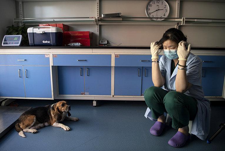 Клонирование домашних питомцев в Китае