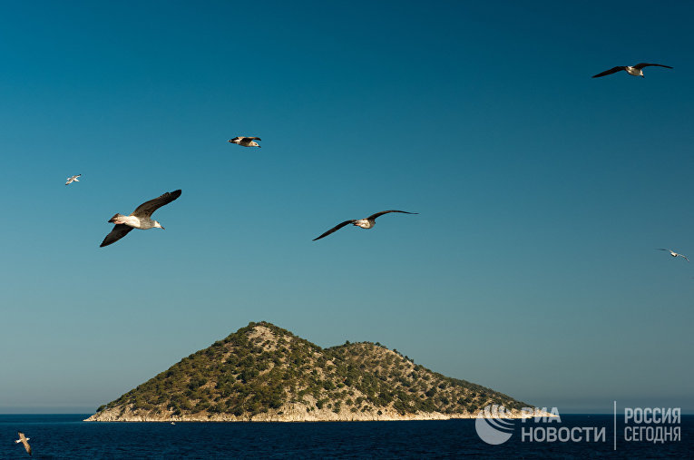 Чайки над греческими островами в Средиземном море