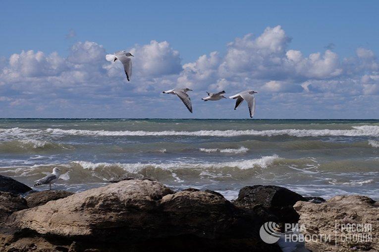 Серебристые чайки на Каспийском море в Актау, Казахстан