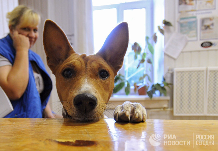 Работа районной ветеринарной станции в Великом Новгороде