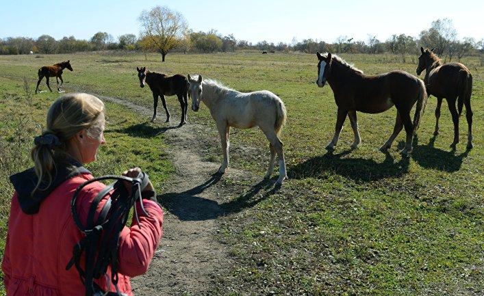 """Разведение лошадей на """"дальневосточном гектаре"""" в Хабаровском крае"""